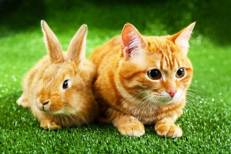 Kediler Tavşanlar ile Anlaşabilir Mi?
