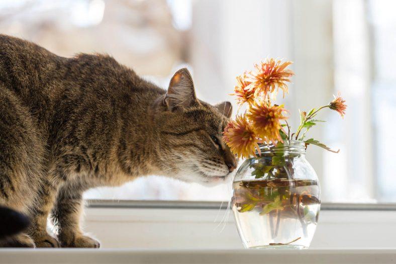 Kedilere Zararlı Olan Çiçekler