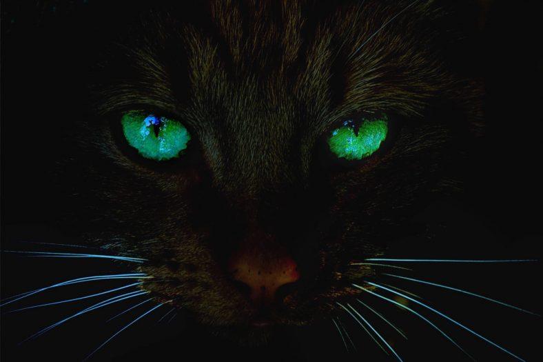 Kedilerin Gözleri Karanlıkta Neden Parlar?