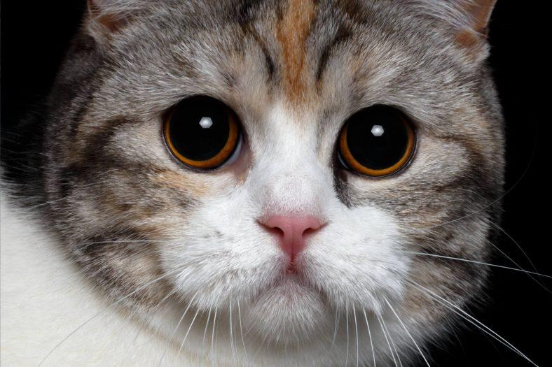 Kedilerin Neden Göz Bebekleri Büyür?