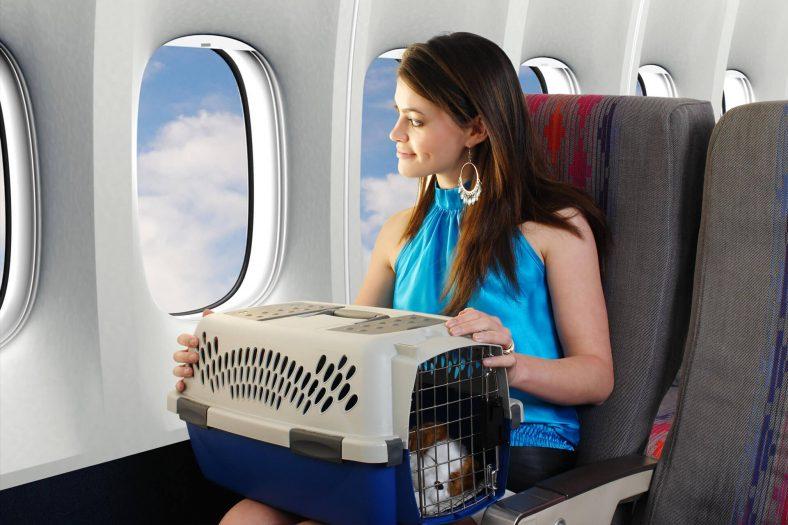 Uçakta Kedi Taşıma Çantası
