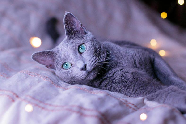 Popüler Kedi Dernekleri