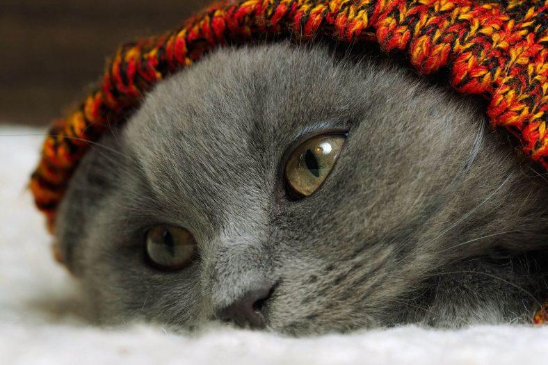 Kedi Çişi Kokusu Nasıl Gider?