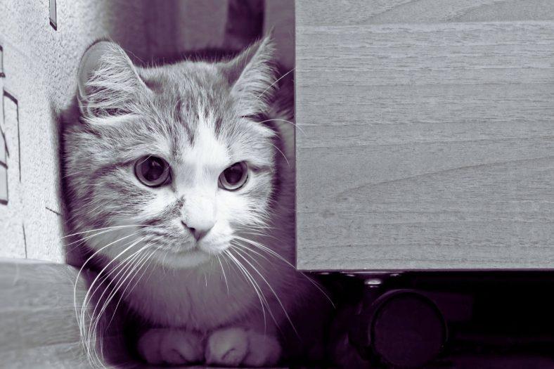 Kedi Çişi Neyle Temizlenir?
