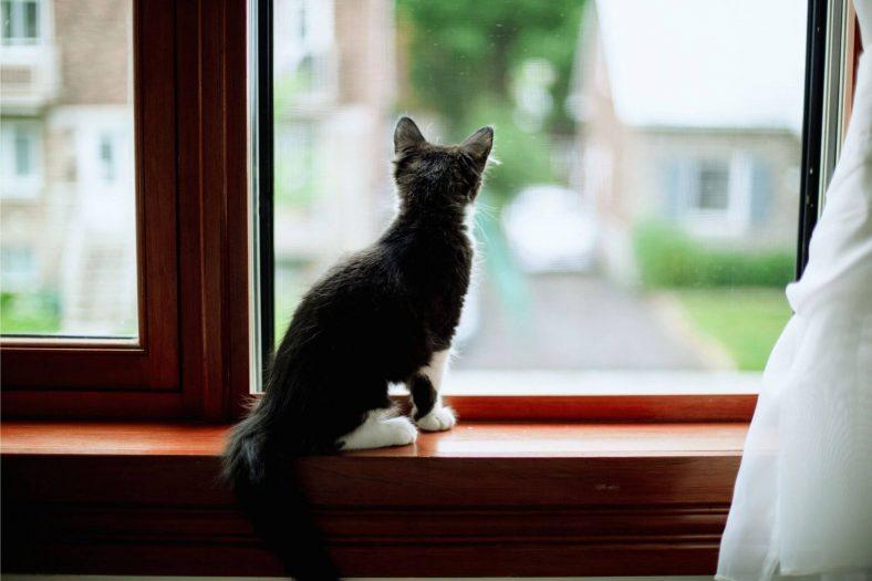 Kedi Evde Yalnız Kalabilir mi?