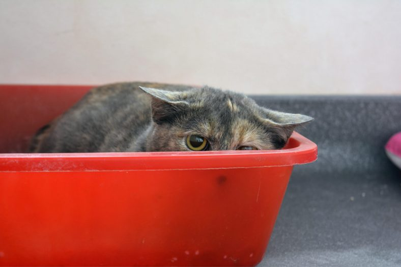 Kedi Neden Kaçar?