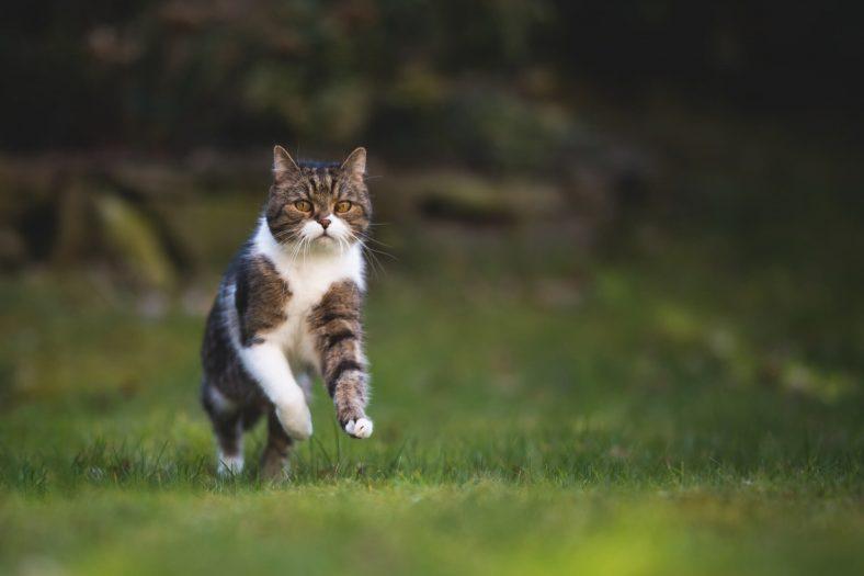 Kedi Sahibini Seçer mi?