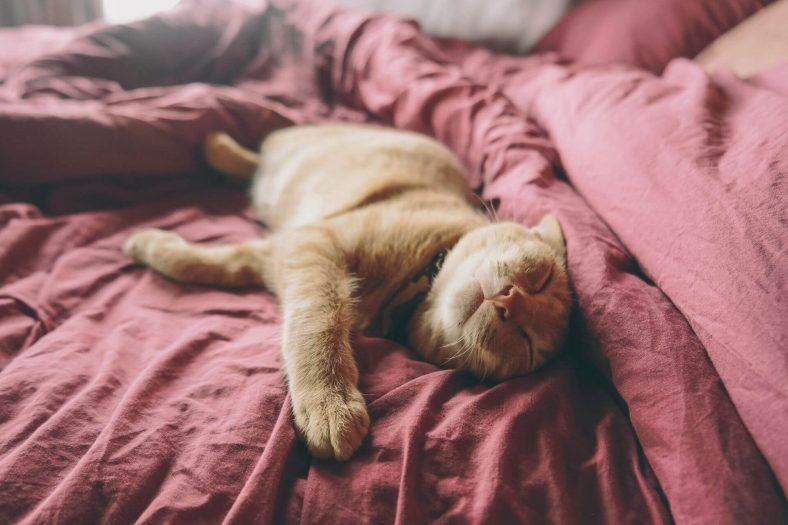 Kedi Sidiği Nasıl Temizlenir?