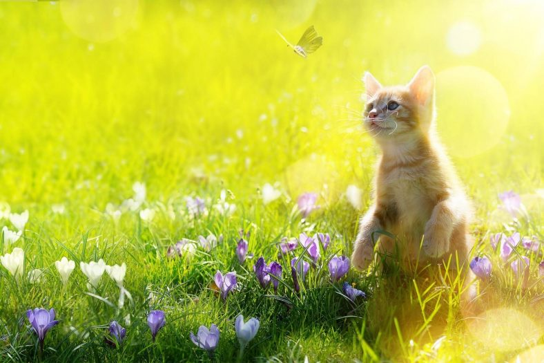 Kediler Böcek Yakalamaktan Hoşlanır
