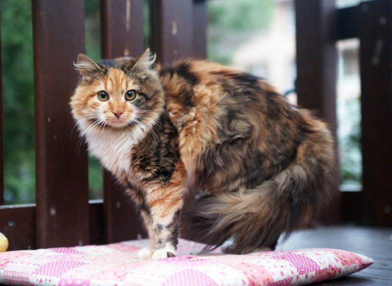Kediler Çişini Ne Kadar Tutabilir?