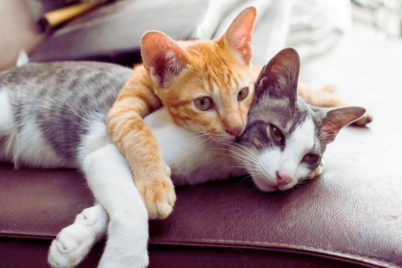 Kedi Eve Nasıl Alıştırılır?