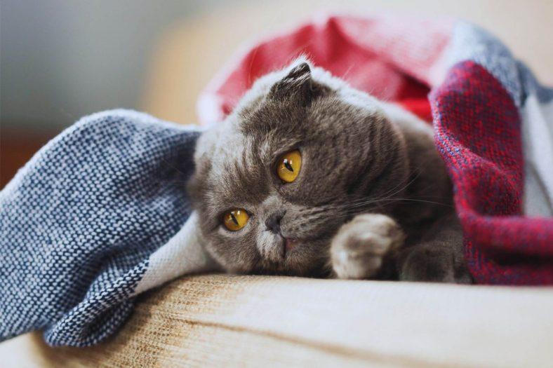 Kediler Eve Neden İşer?