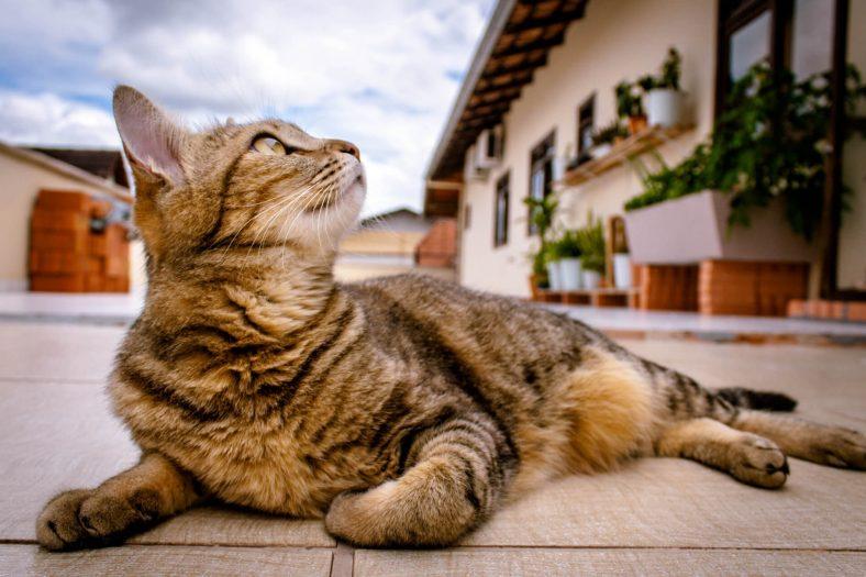 Kediler Neden Soğuk Yere Yatar?