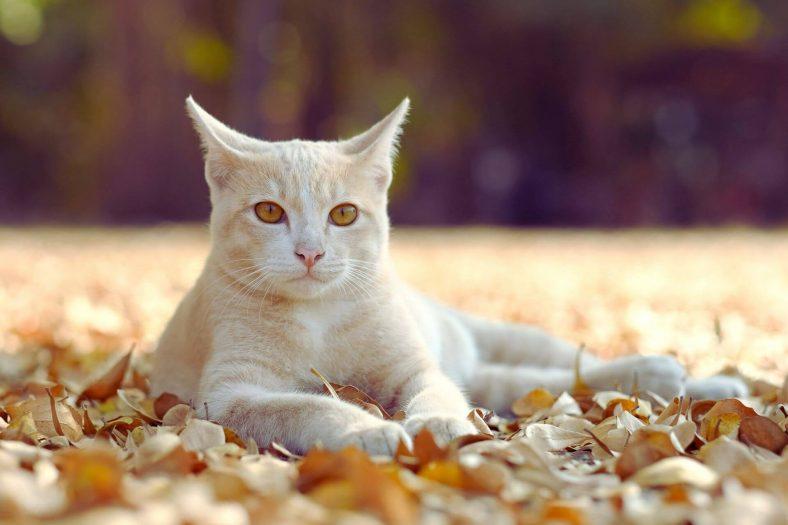 Kediler Neyden Hoşlanır?