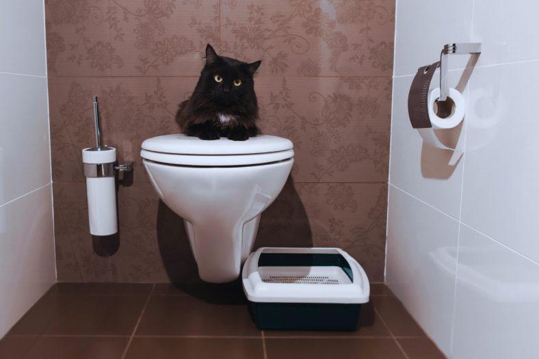 Kediler Sahiplerini Neden Tuvalet Kapısında Bekler?