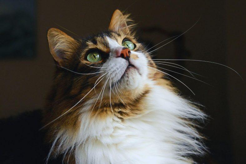 Kedilerin Hoşlandığı Şeyler Nelerdir?