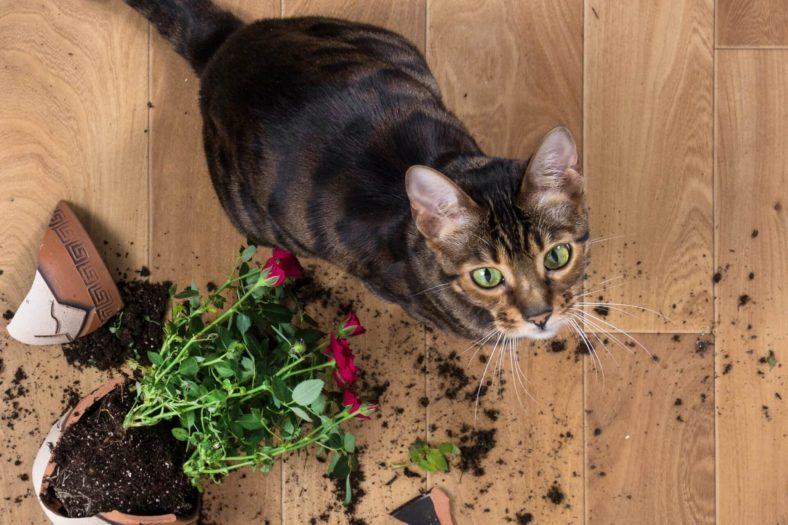 Kedim Toprak Yiyor