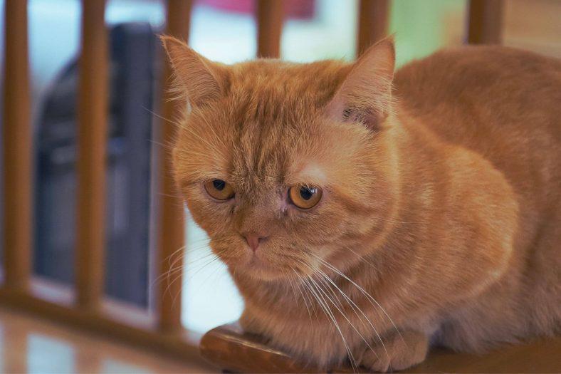 Kedinin Çişi Nasıl Temizlenir?