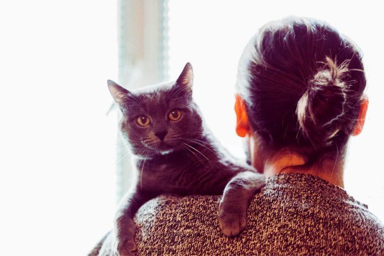 Kedinizi Ailenizle Tanıştırma Vakti