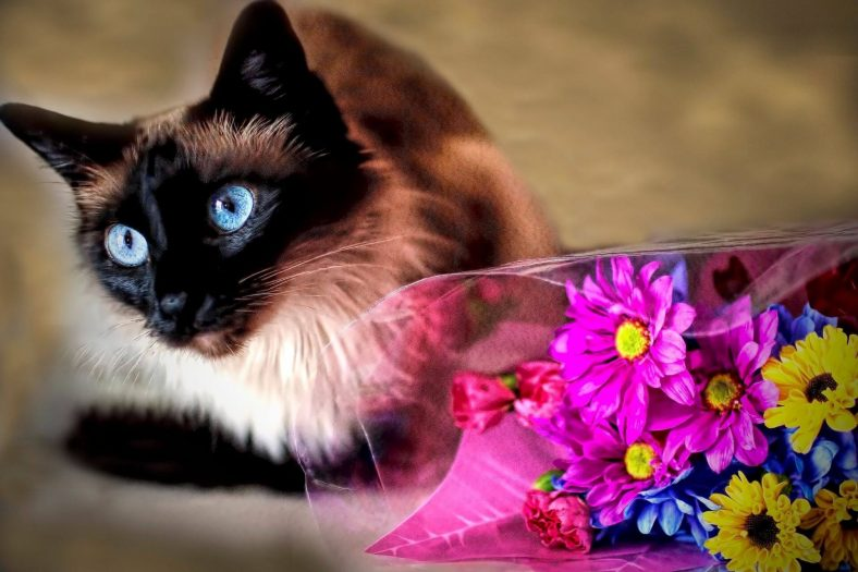 Kediyi Çiçeklerden Uzak Tutmak