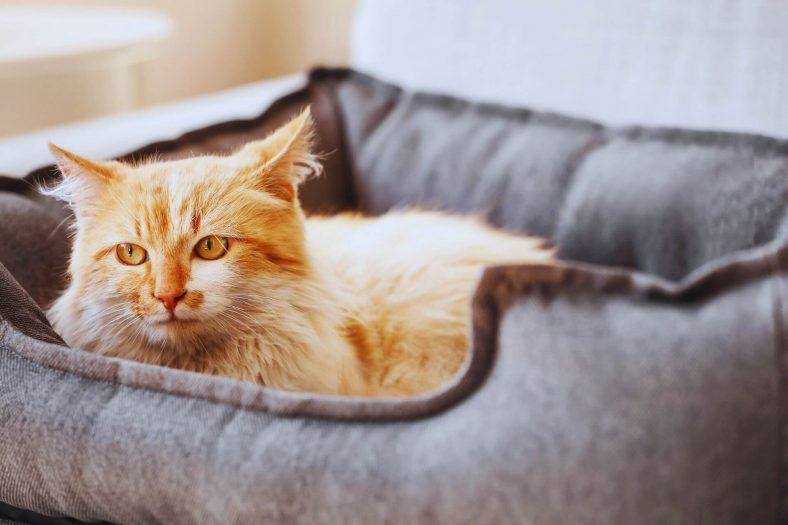 Kediyi Yatağına Alıştırmak İçin Yapılabilecekler