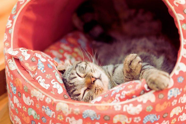 Kediyi Yatağına Alıştırmak İçin Yapılabilecekler Nelerdir