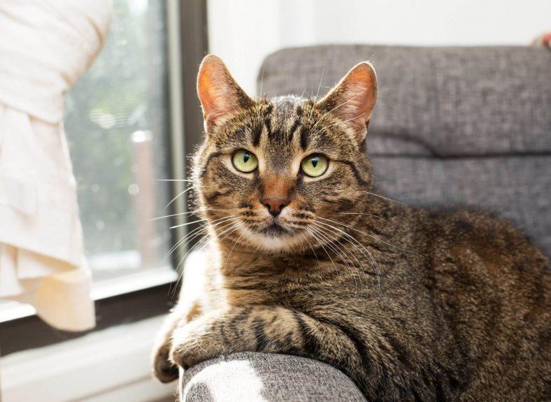 Koltuktan Kedi Çişi Kokusu Nasıl Çıkar?