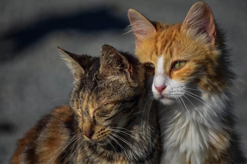 Sahibinden Ayrılın Kediler Üzülür mü?