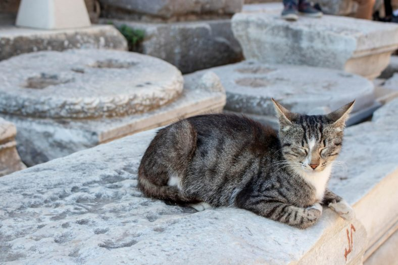 Soğuk Yere Yatan Kediler İçin Çözüm