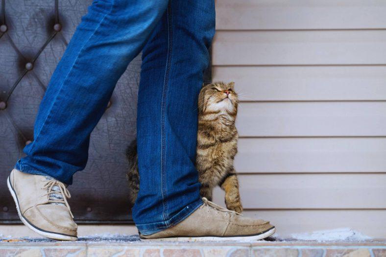 Sokak Kedileri Sahibini Özler mi?