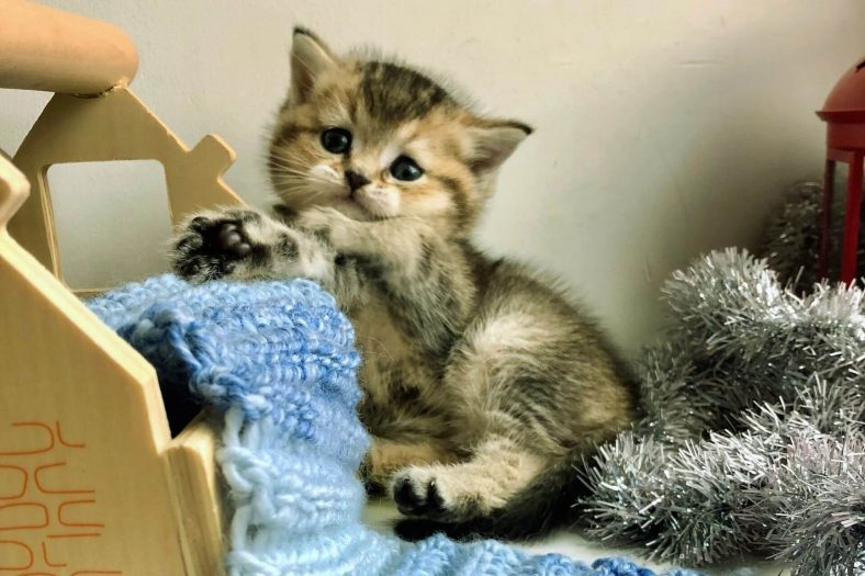Yavru Kediler Evde Yalnız Kalabilir mi?