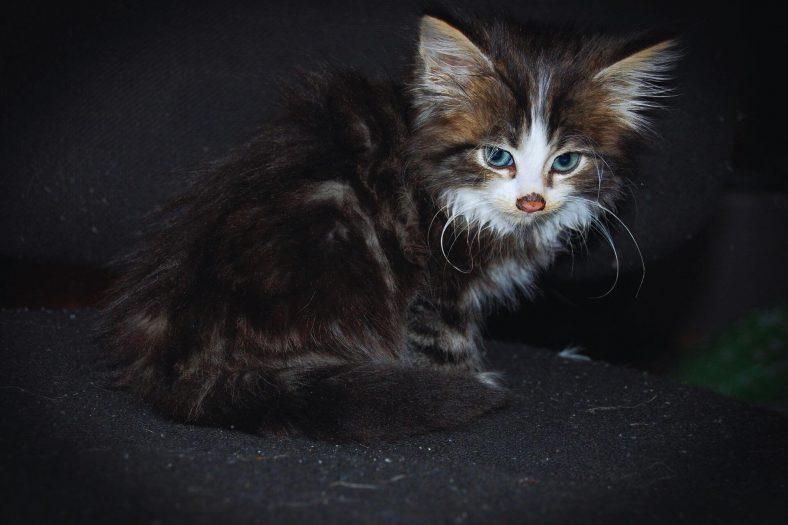 Yavru Kediler Neden Eve İşer?