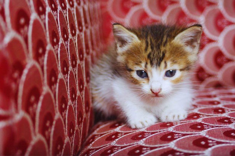 Yavru Kediler Neden Kumundan Başka Yere İşer?