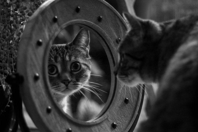 Yetişkin Kedi Eve Nasıl Alıştırılır?