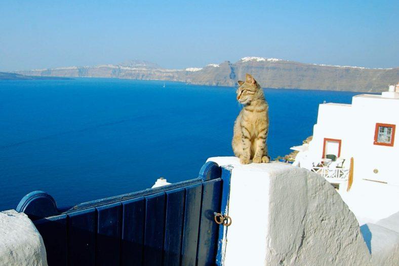 Yunanistan Kedisi