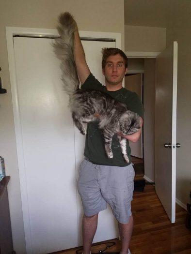 En Uzun Kuyruklu Kedi: Cygnus