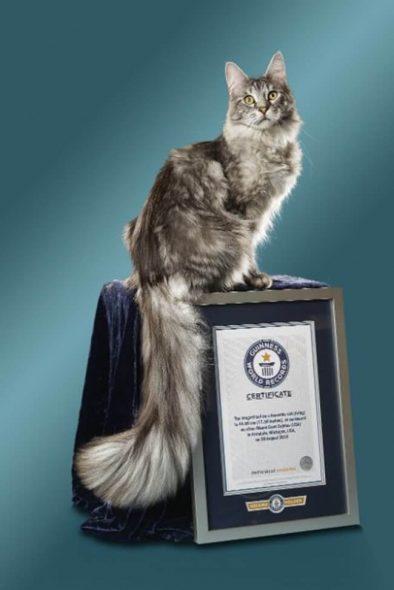 En Uzun Kuyruklu Kedi Şampiyonu