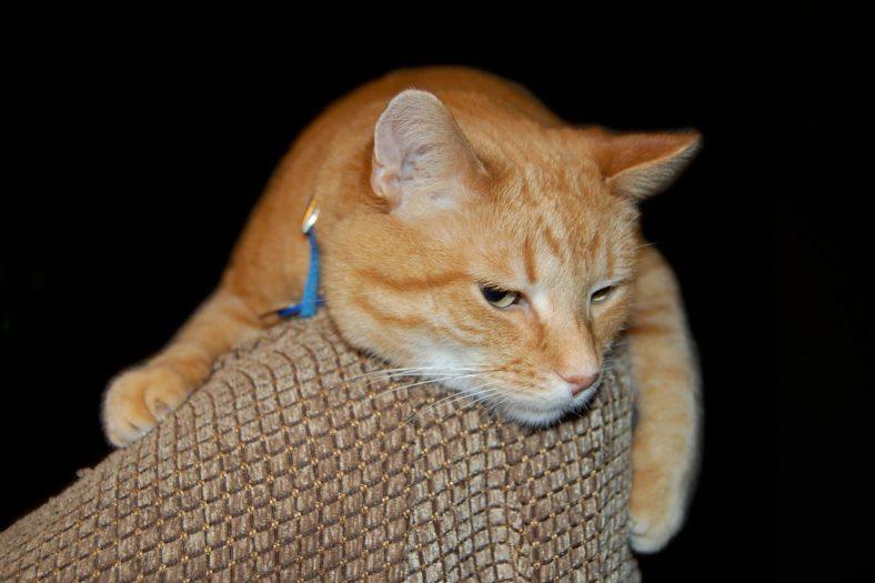 Kayıp Kedi Buldum Ne Yapmalıyım?