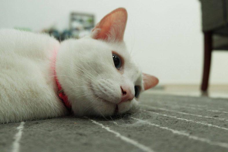 Kayıp Kedi Bulma