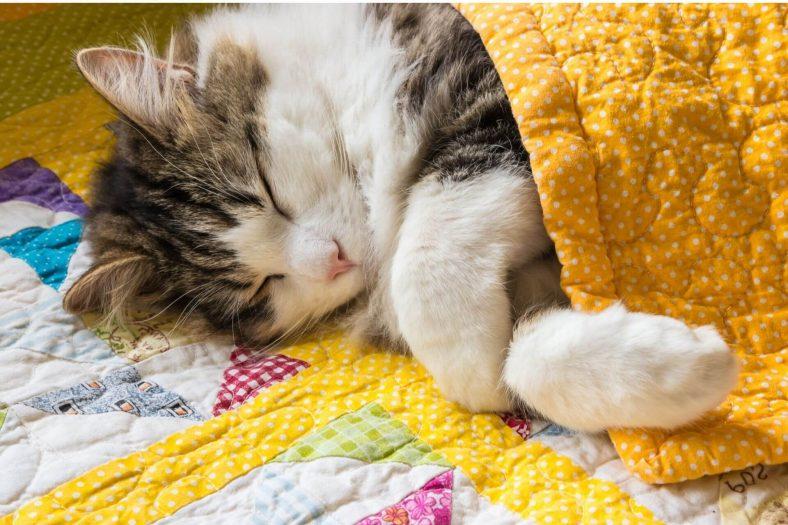 Kedi Karma Aşısının Yan Etkisi