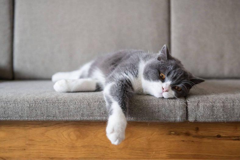 Kedi Mantar Aşısı Fiyatı