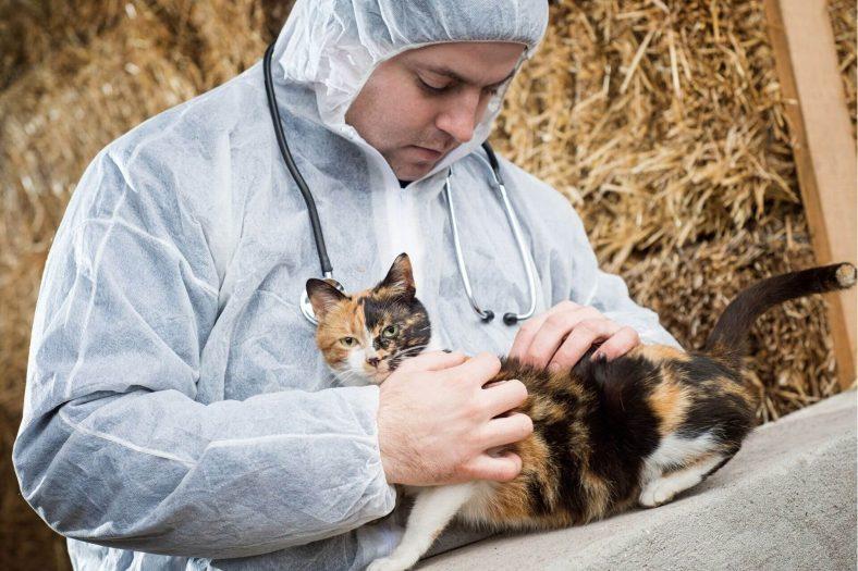 Kedilerde Saçkıran Tedavisi