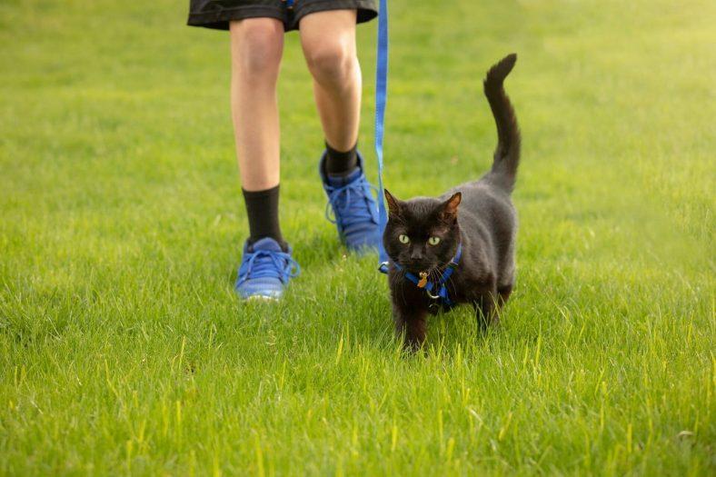 Kedimi Nasıl Mutlu Ederim? Mutlu Etmenin Yolları