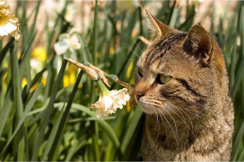 Kediler Koku Alır mı?