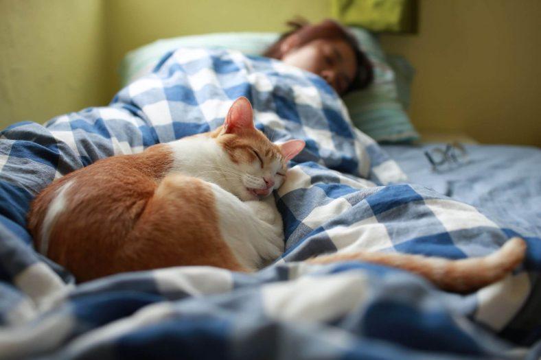 Kedilerin İnsan Psikolojisine Etkileri Nelerdir?