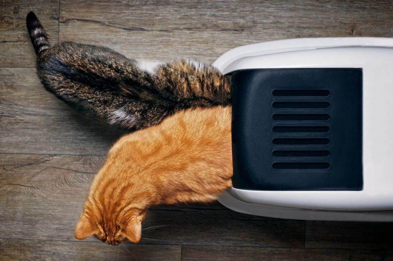 İki Kedi Bir Tuvaleti Kullanır mı?