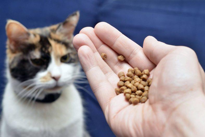 İnsanlar Kedi Maması Yerse Ne Olur?