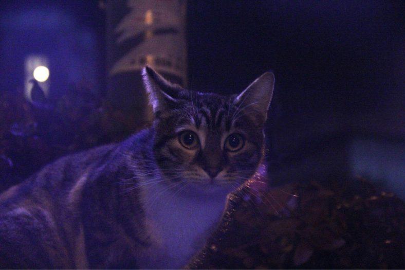 Kedi Karanlıktan Korkar mı?
