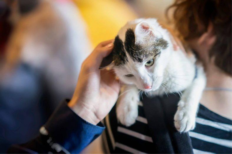 Kedi Korkusunu Yenmek İçin Dua