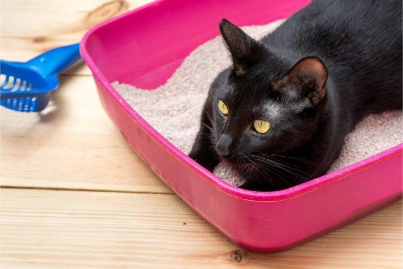 Kedi Kumu Nasıl Kullanılmalı?